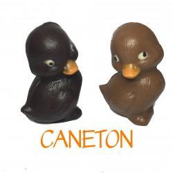 Caneton Noir